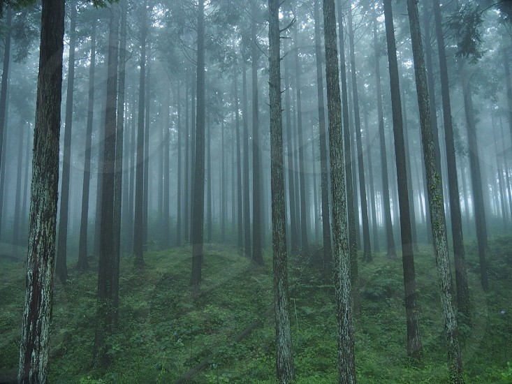 photography of forest trees photo