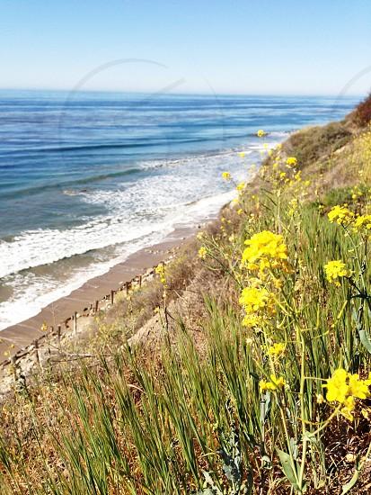 Goleta the good land photo