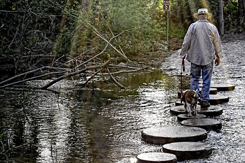 Seen from behind a man and his dog walk on stepping stones over water in a park woods photo