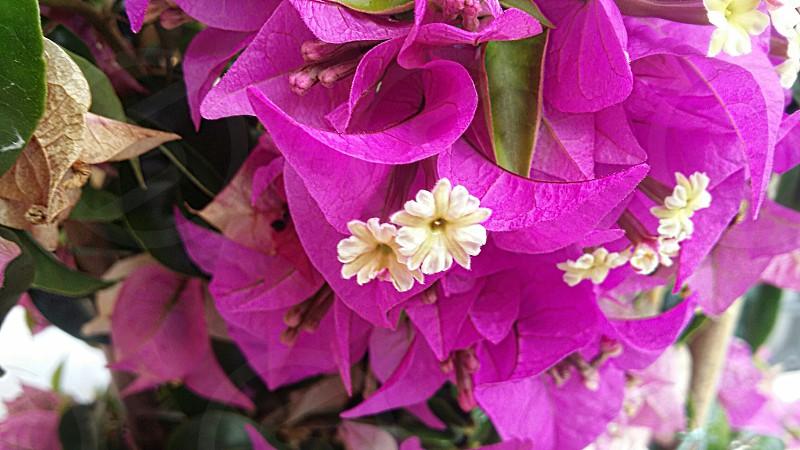 #Flower #Semmering #Austria photo