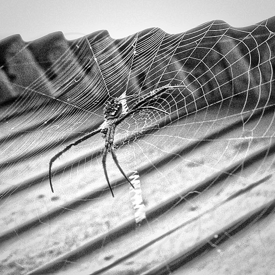 gray scale photography of spider on web photo
