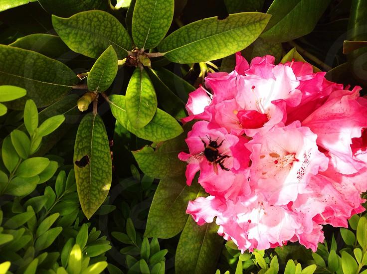 Garden life photo