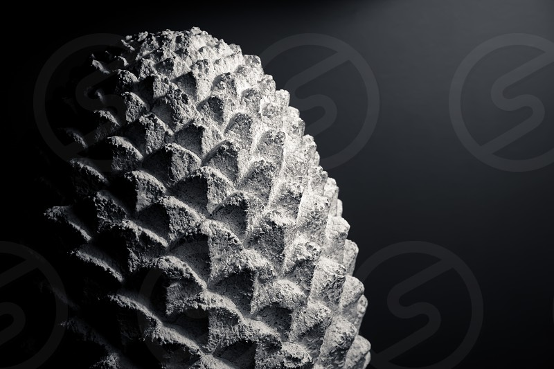 pine cone pine cone sculpture stone cement macro close-up black and white background texture photo