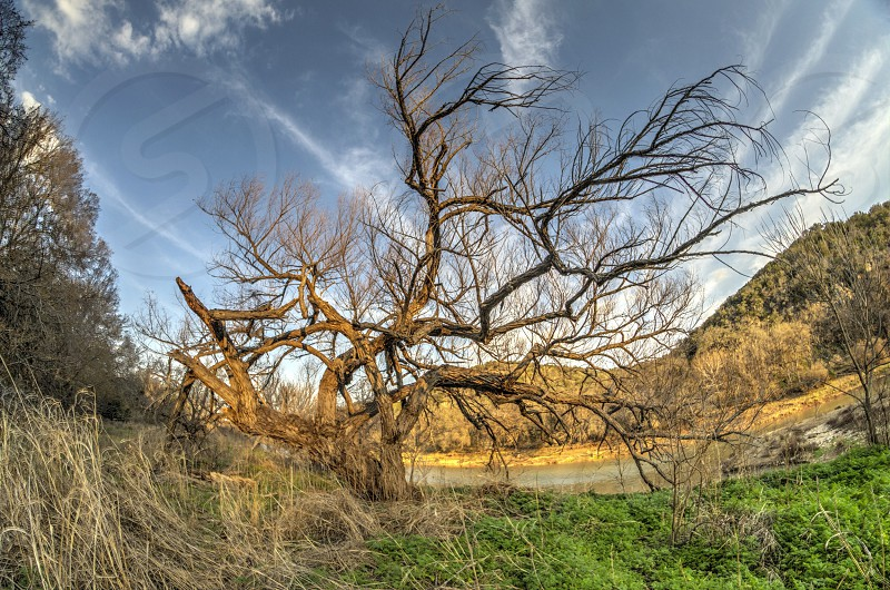 Tree Texas nature dead magical ancient photo