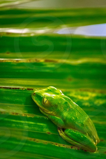 Green frog palm textured wildlife  photo