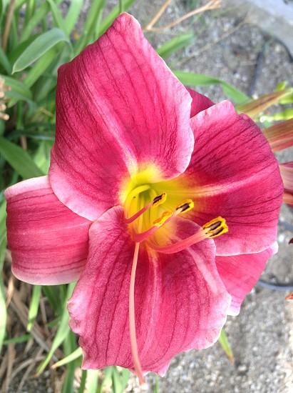 Flowerplantpink photo