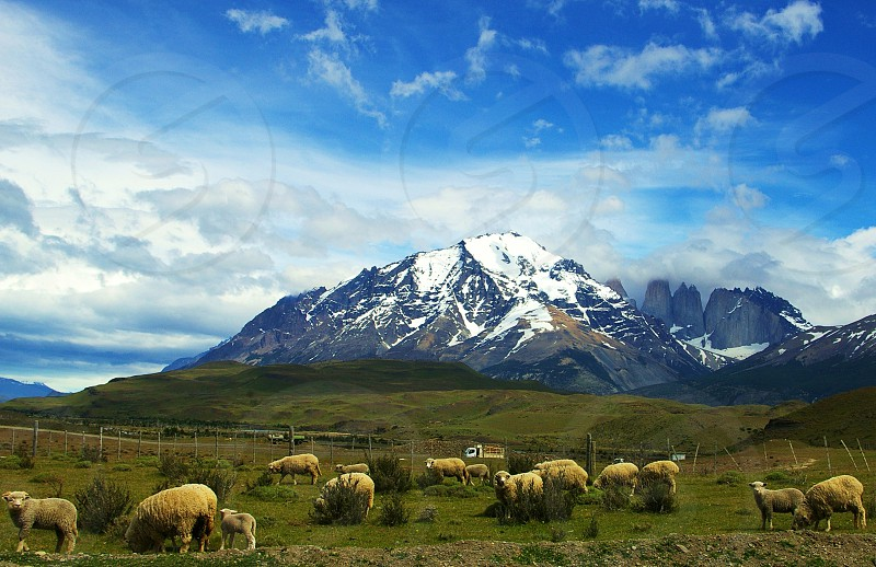 Landscape view of the National Park Las Torres del Paine at the Chilean Patagonia South America. photo