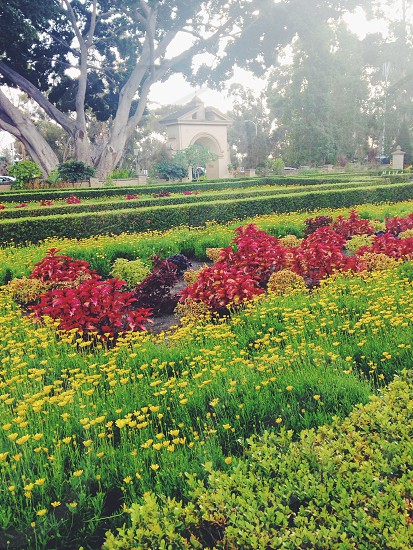 yellow and red flower garden  photo