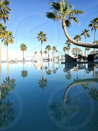 Amazing nature portrait with palms trees and water photo