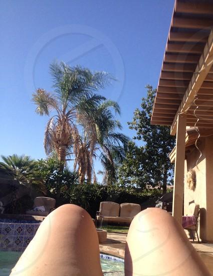Sunny Southern California Palm trees blue skies.  photo