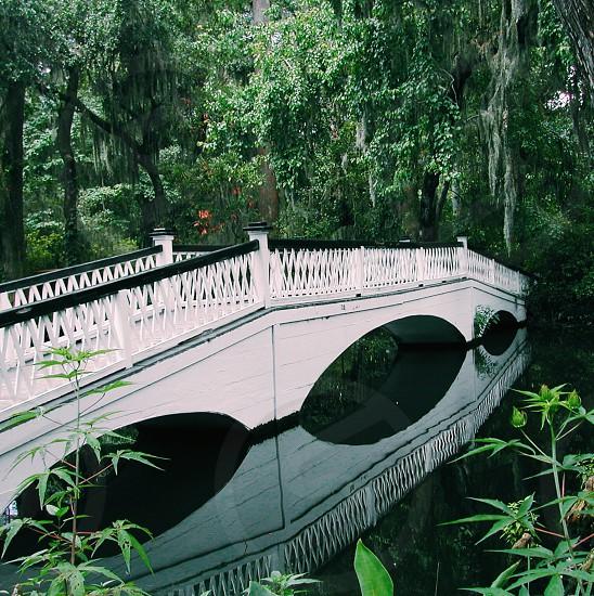 Green swamp pond bridge reflection USA travel explore trees photo