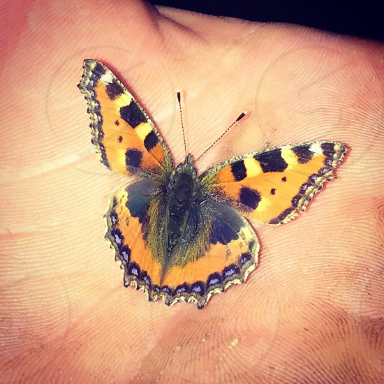 Beautiful Autumn moth  photo
