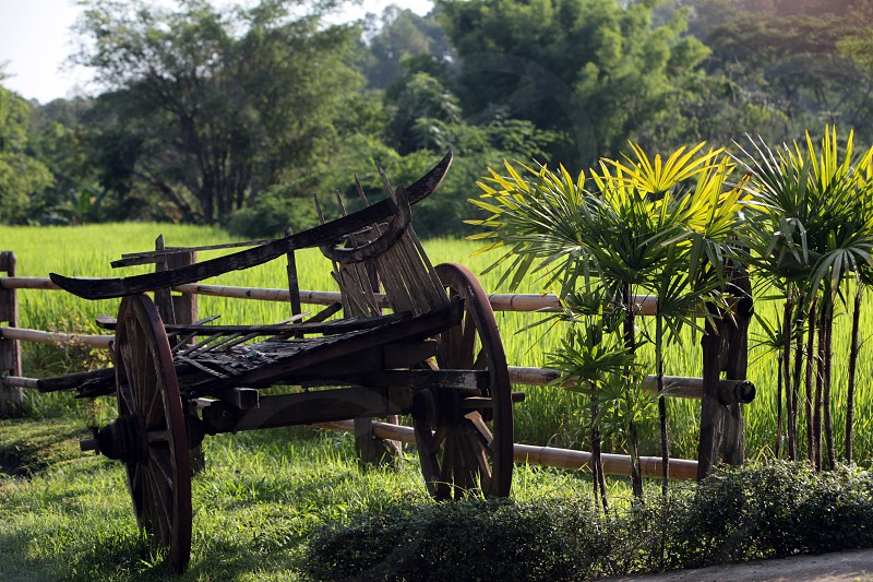 a farming village of the minority of Lahu or Lisu near the village of Chiang Dao in the north of chiang mai in the north of Thailand in Southeastasia.  photo