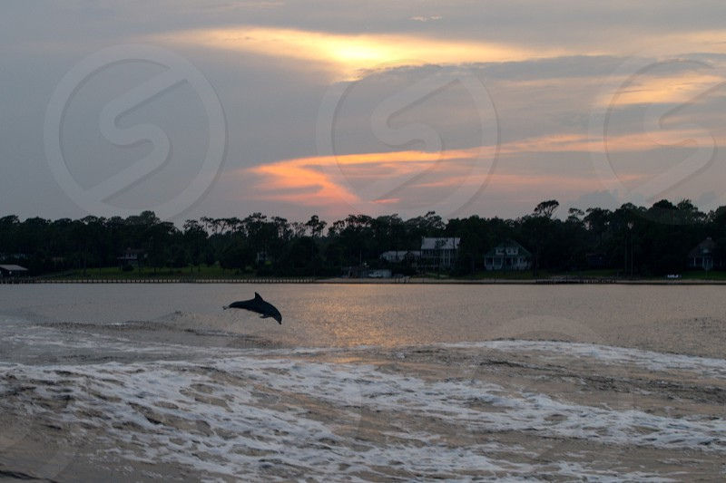 ocean wave with dolphin jumping and beach houses in background photo