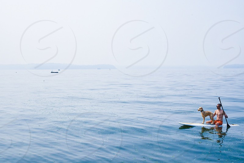 Orca patrol summer sea whales dogs paddle boards sup photo