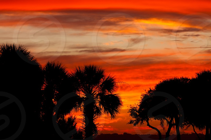 Southern sunset sky with palm and oak tree silhouettes South Carolina US photo