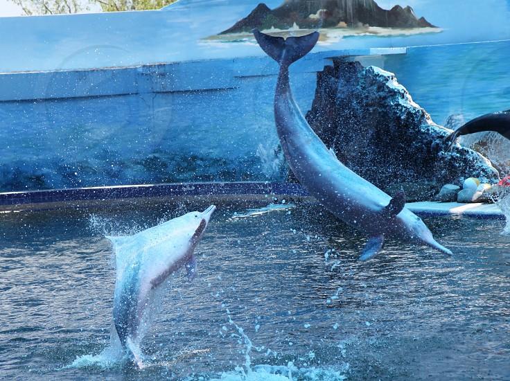 water dolphin jump show fun funny cute animal aquatic photo