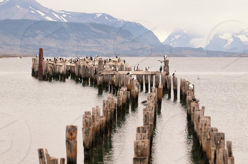 wood logs line up on the sea photo