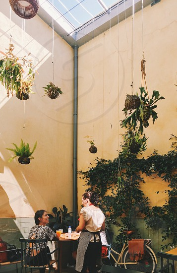 cafe coffee interior sunlight plants greenery natural light courtyard people person serving eating chatting talking young people photo
