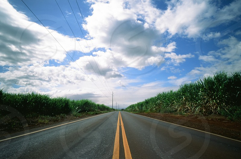 A low point of view perspective of a wide open road between two sugar cane fields shot on the island of Maui in Hawaii while lying on the street  photo