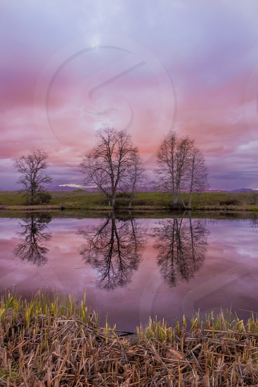 pink pink skies sunset landscape lake reflections trees three tress photo