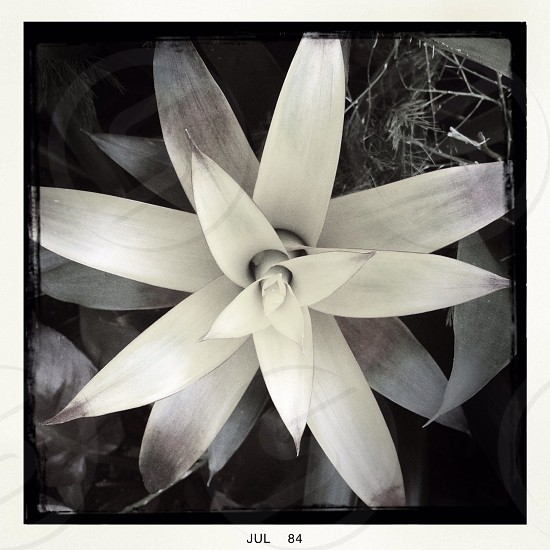 gray and white flower photo