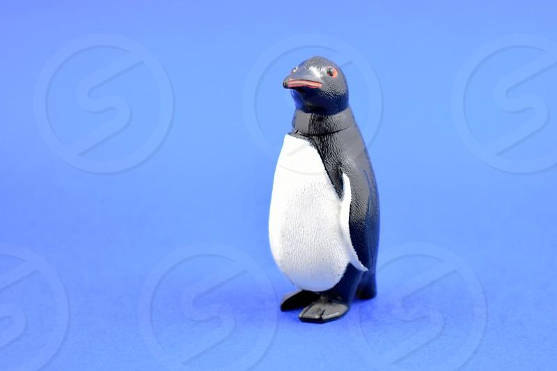 Penguin toy on a blue background. Penguin figurine photo