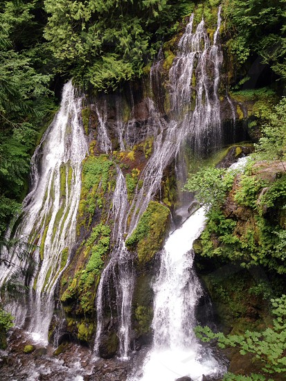 Panther Creek Falls waterfall Gifford Pinchot National Forest moss water pool cascade washington photo