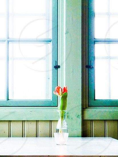 Soft turquoise table window vase wood wooden indoors interior design idyllic rustic vase flower red white placed restaurant glass web space background wallpaper spacious still life home  photo