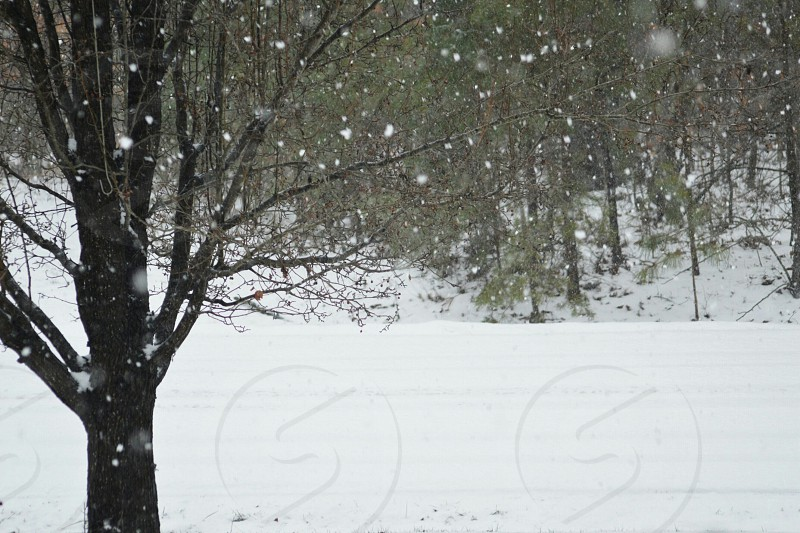 white snow falling on trees on a white snow covered hill photo