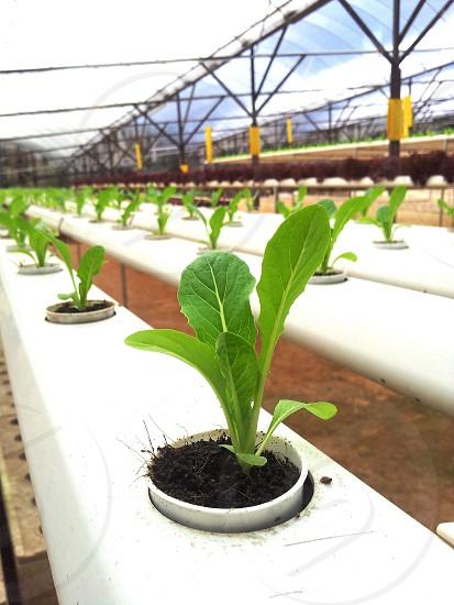 agriculture farm ..  photo