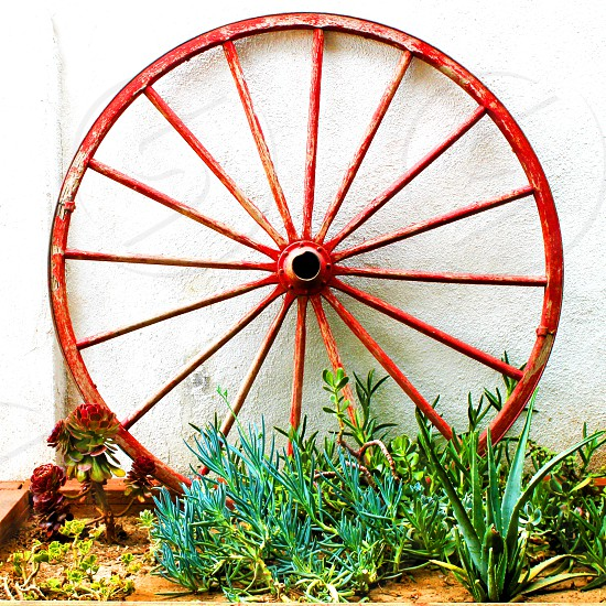 A wagon wheel leans against a white wall in a garden. photo