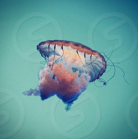 Jellyfishjellyseaoceanaquariumaquaticwatercolorful photo