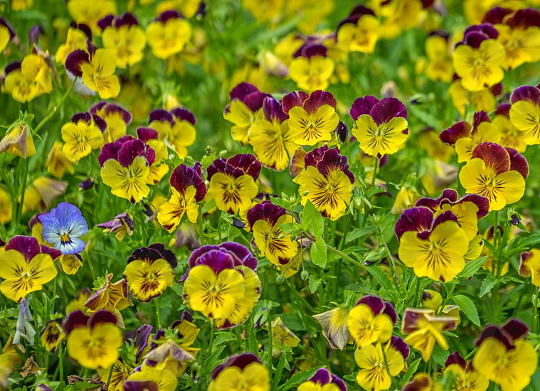 purple and yellow flowers photo