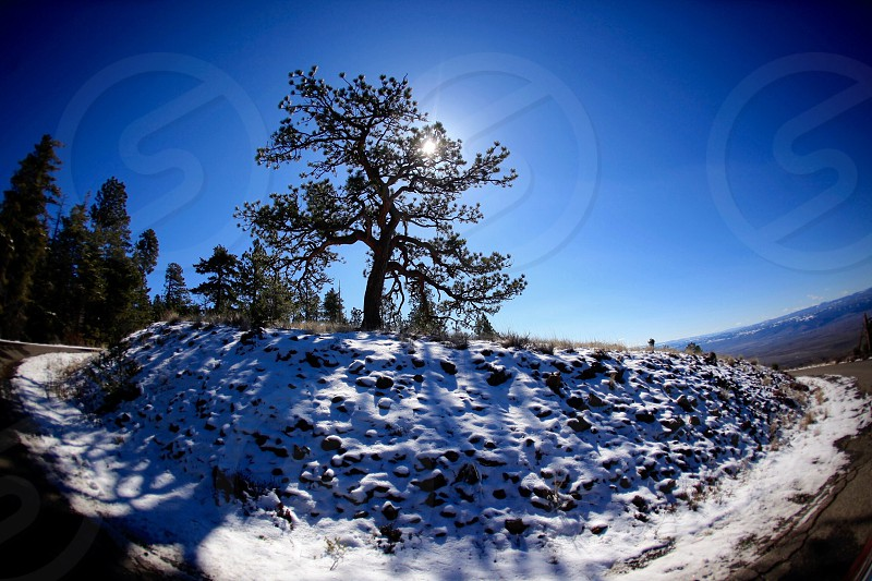 tree on snow covered hilltop during daytime photo