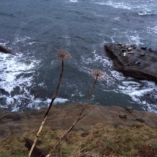 dandelion flowers on cliff photo