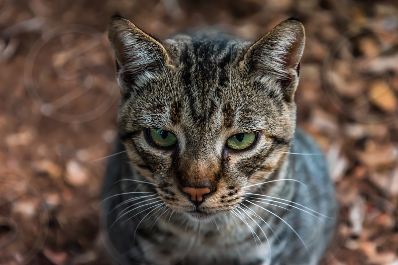 Pets / Animals photo