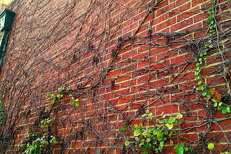 vibes bricks brickwall climbing vines building photo