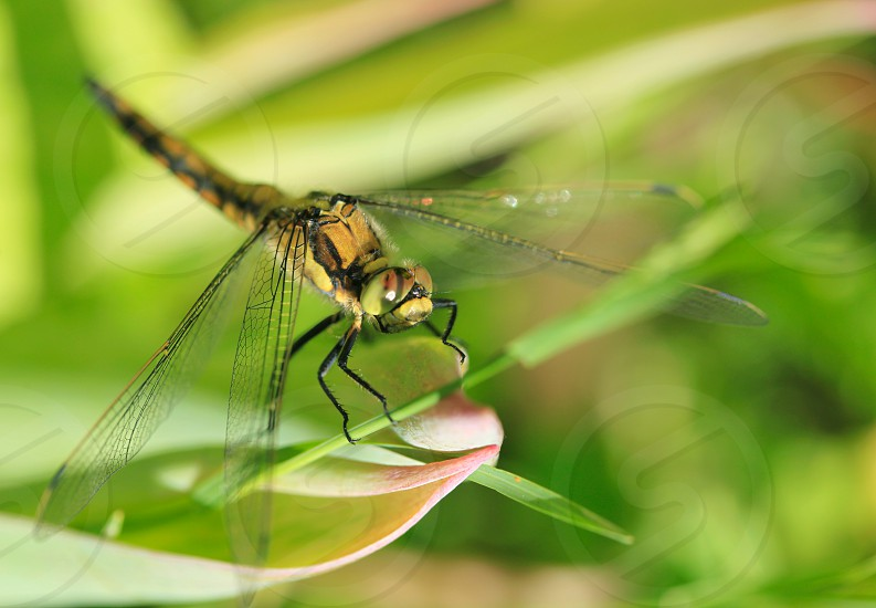 dragonfly on green photo