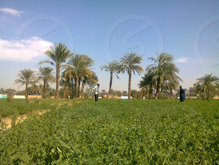 Aswan  photo