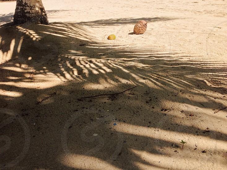 palm tree shado photo