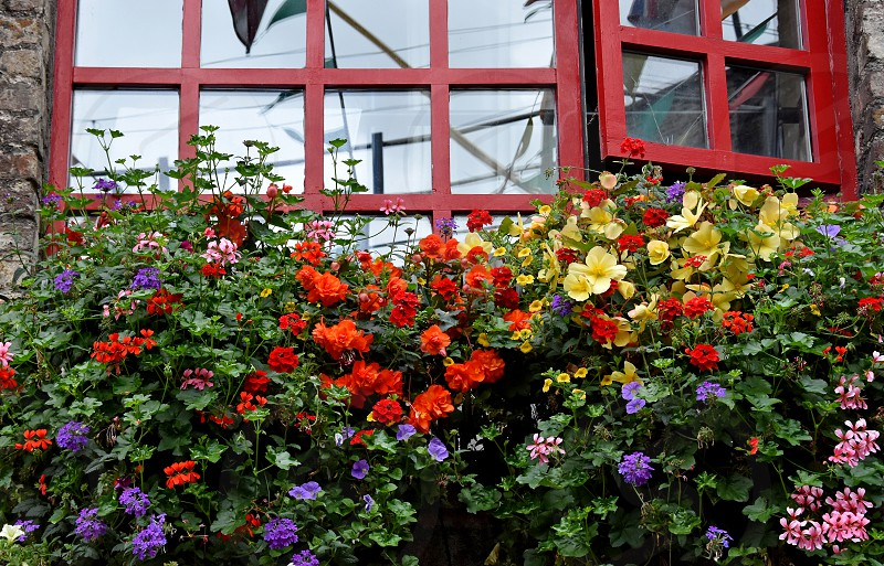 Window with flowers. Colorful balcony flowers. Romantic garden still life. Summer floral decoration photo