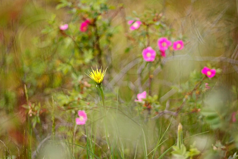 small pink and yellow flowers photo