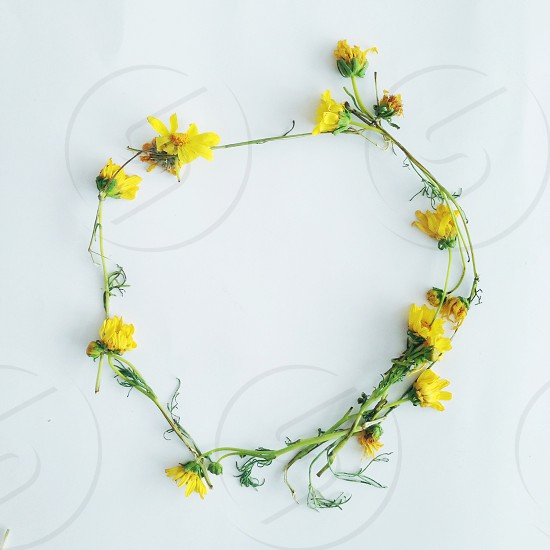 yellow flowered crown on white surface photo