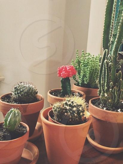 cactus plant photo