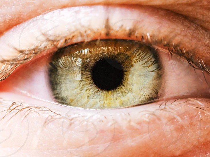 Extreme close up of woman's grenn eye iris. Human eye iris contracting. photo