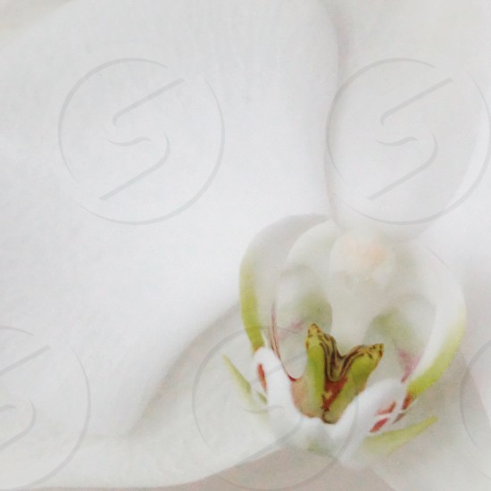April showers bring May flowers orchid white pedals bloom nature photo