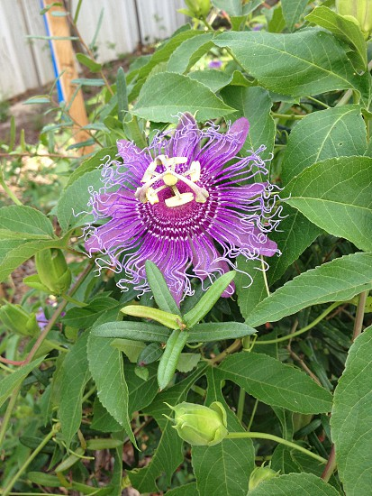 Interesting flower photo