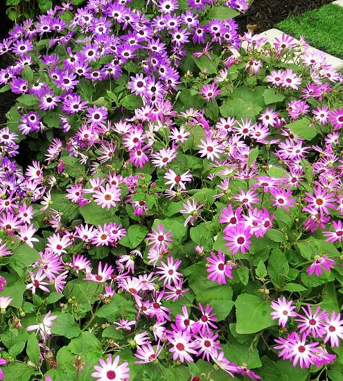 Purple Flower Bed photo