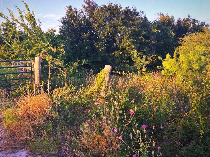Nature rural wildflowers flora fence country Scenic native plants wild overgrowth lush spring summer dirt road peaceful photo